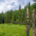 Π.Ε: Δυτικής Αττικής: Απαγορεύεται η κυκλοφορία σε δασικές περιοχές